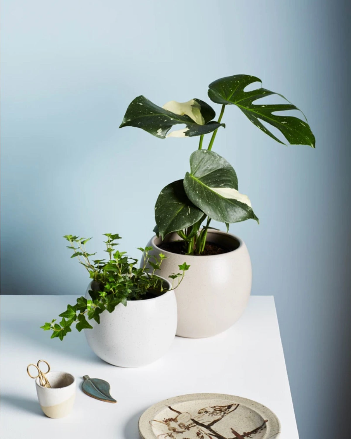 Bower Pot - Small