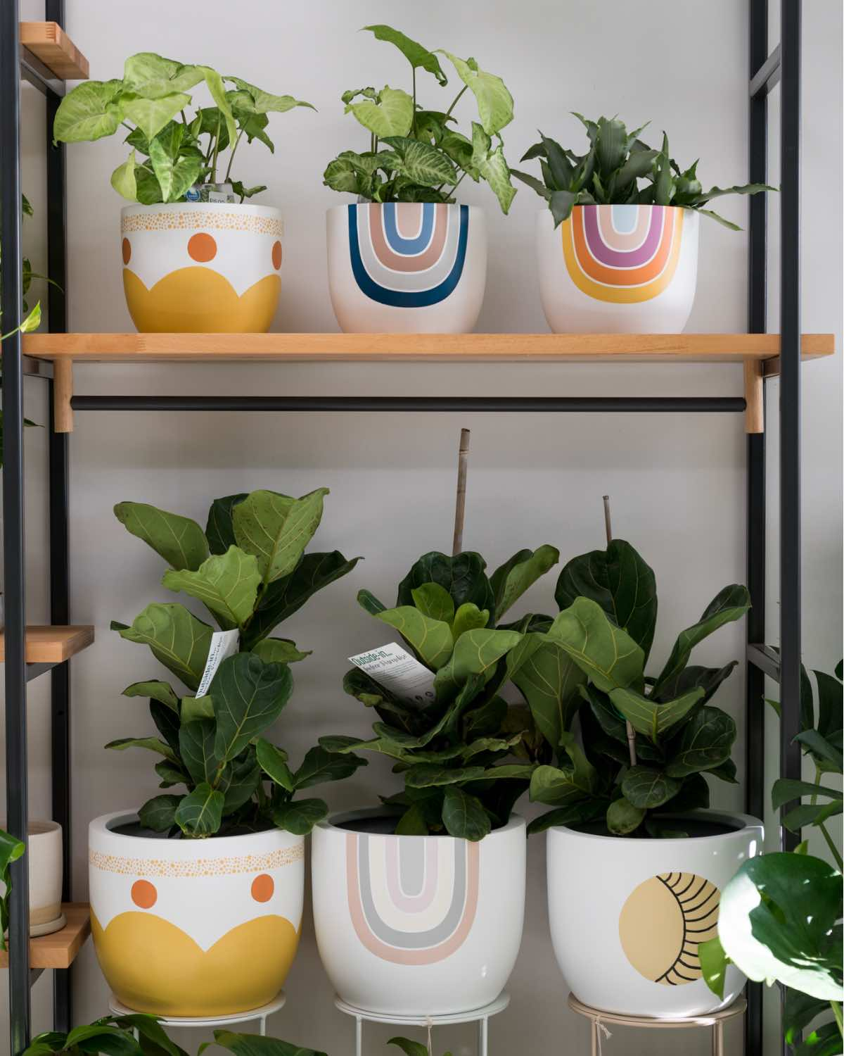 Mowgli Studio Sunburnt Country Planter