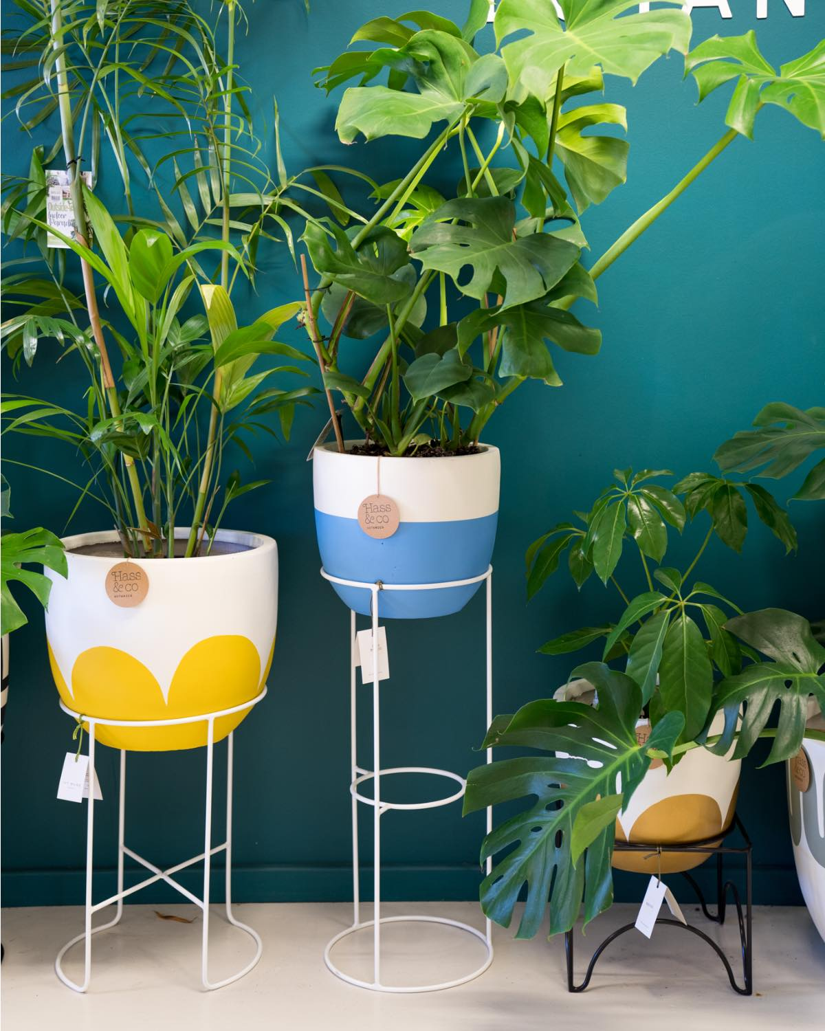 Comet Plant Stand