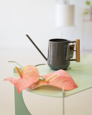 Indoor Watering Can $30.00