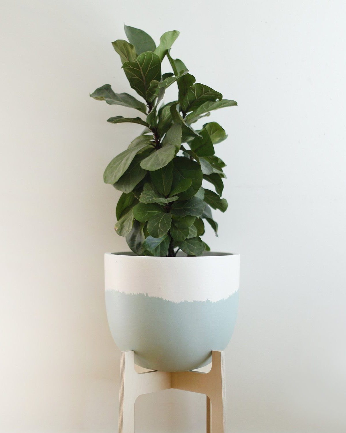 Toast & Honey Sorbet Planter Mint - Small