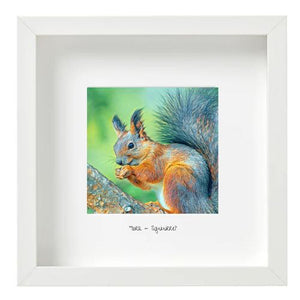 Squirrel - Iora