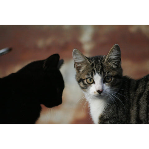 PHOTO CHATONS DUO