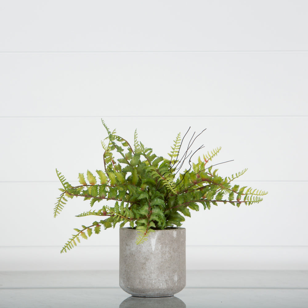 Cement Vase with Fern