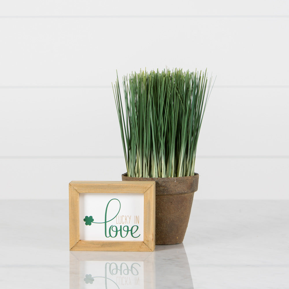 Potted Grass