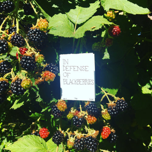 In Defense Of Blackberries
