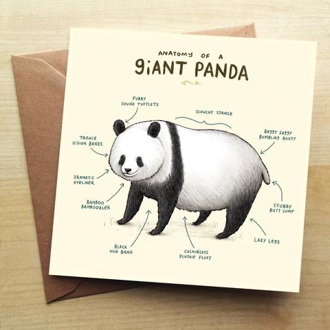 Sophie Corrigan Giant Panda Anatomy Card (4700856811652)