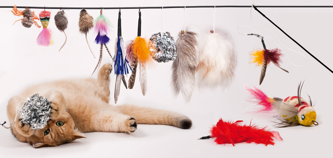 Top 10 Must Have Cat Toys