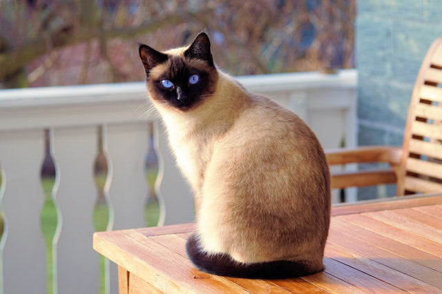 How To Pick The Best Cat Breed For You