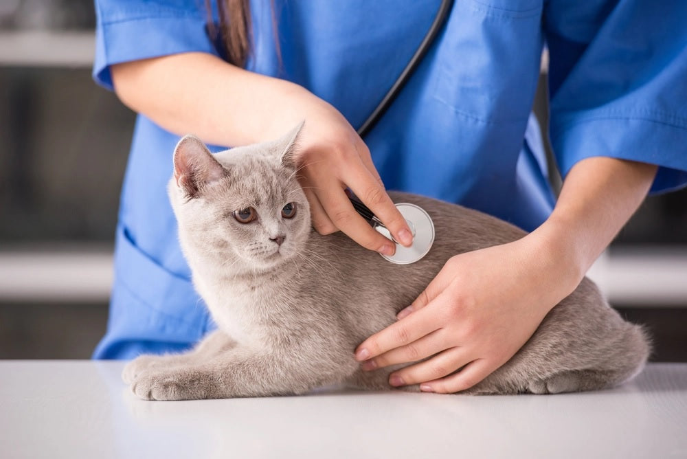 Cat Prenatal and Postpartum Care