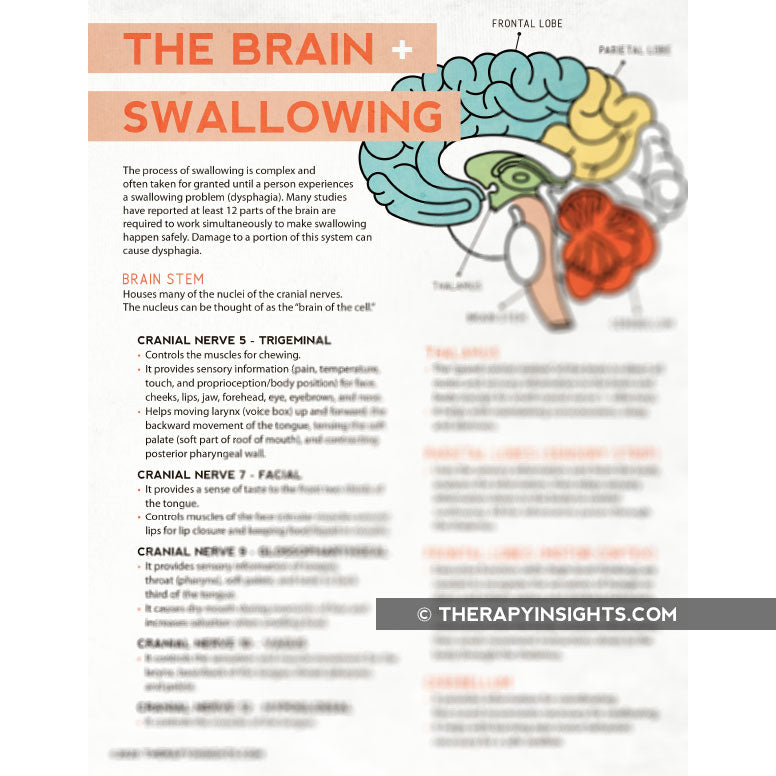 The Brain and Swallowing