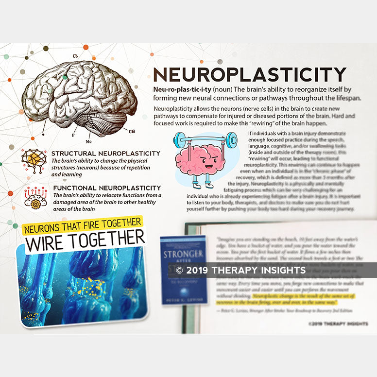 Neuroplasticity - how the brain can rewire itself - health literacy for adults in rehabilitation therapy - speech therapy materials for adults - Therapy Insights - Therapy Fix