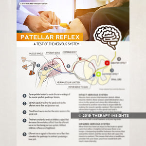 The Patellar Reflex