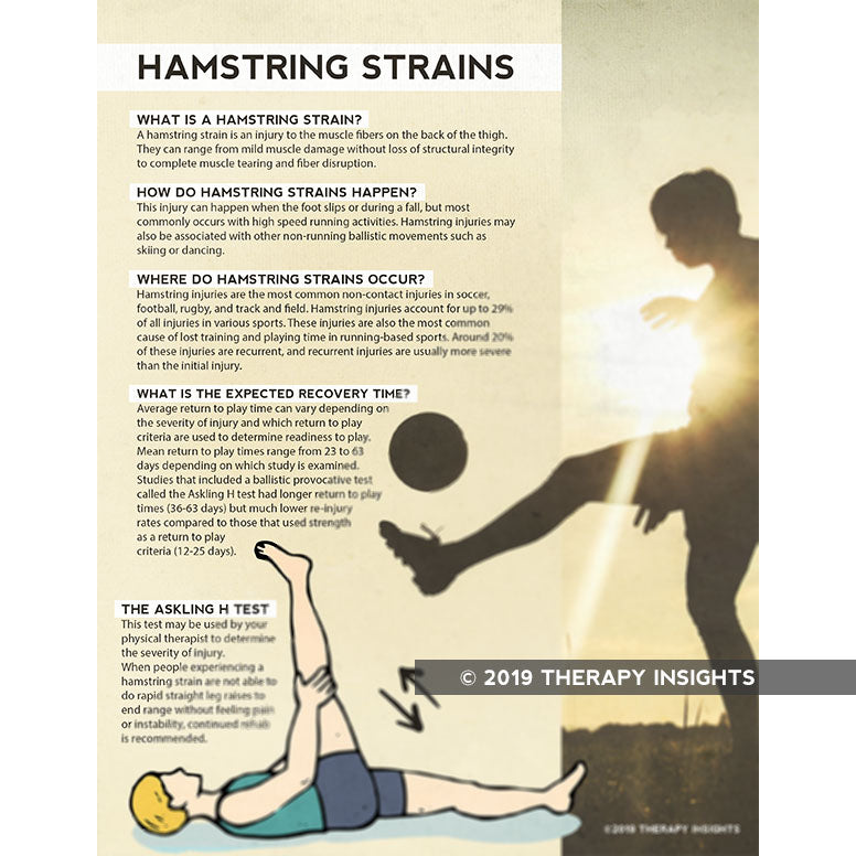 Hamstring injuries- what to expect- handout for patients - physical therapy handouts - physical therapy health literacy - Therapy Insights - Therapy Fix