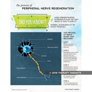 Peripheral nerve damage and recovery - Therapy Insights - Therapy Fix