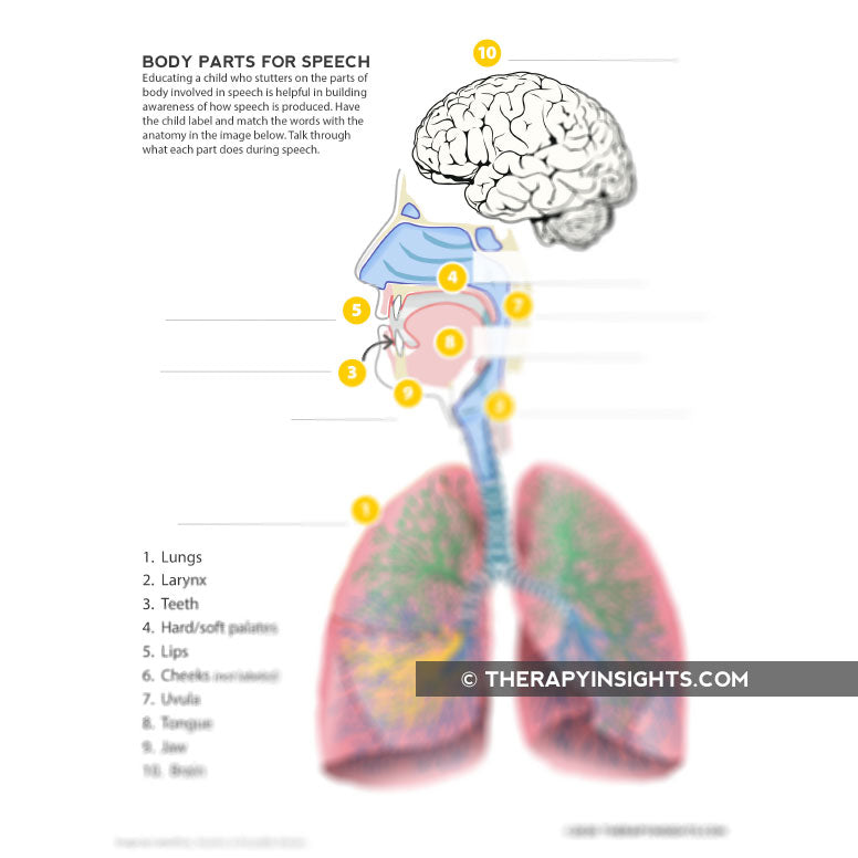 Pediatric Speech Task: Anatomy of Speech