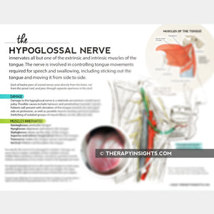 Load image into Gallery viewer, Handout: The Hypoglossal Nerve