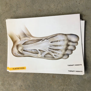 Load image into Gallery viewer, Clinical Anatomy Card: Plantar Fascia
