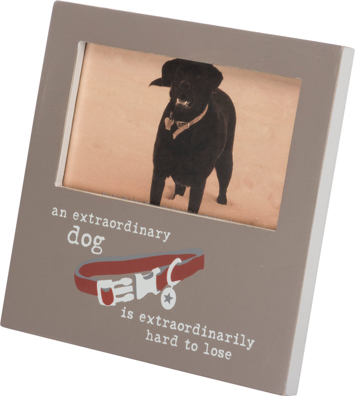 Extraordinary Dog Is Hard To Lose Frame