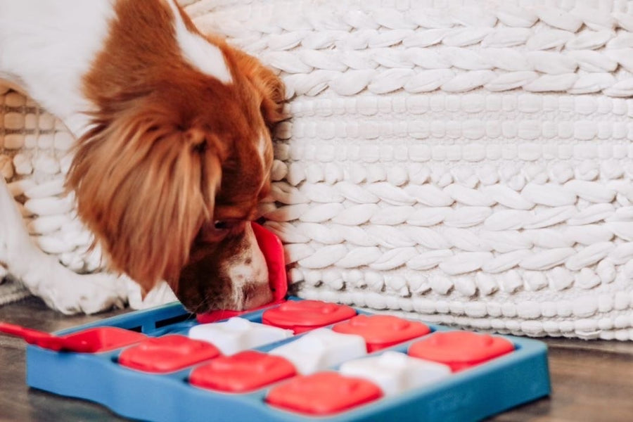Nina Ottosson Dog Brick