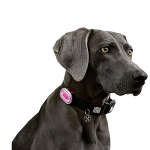 Max & Molly Ultra Bright LED Pet Collar Light