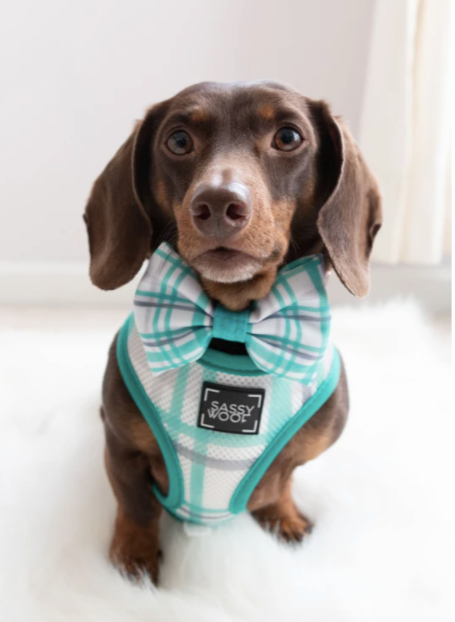 Wag Your Teal - Reversible Harness