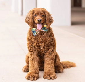 Bouquet Dog Bow Tie - Standard