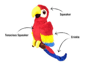 Paula the Parrot -  P.L.A.Y. Pet Lifestyle and You