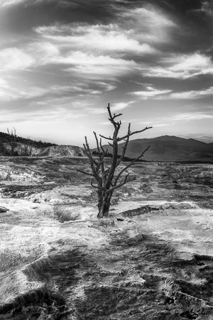 """Scarred"" - Yellowstone National Park, WY"