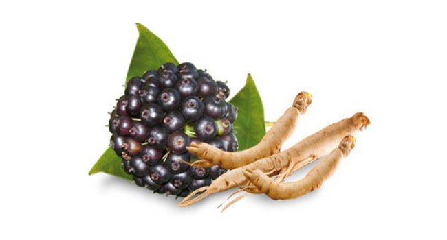 Siberian Ginseng and why you need it in your daily diet | kulture.store