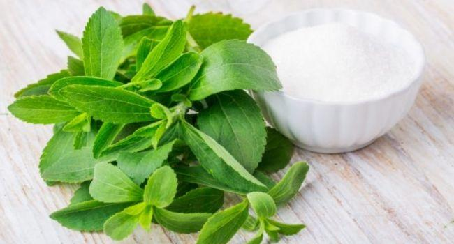 Stevia doesn't raise insulin levels | kulture.store