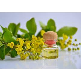 Top 10 Essential Oils: Aromatherapy for Health and Beauty
