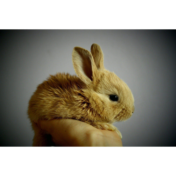 Cruelty Free Cosmetics - Animal Testing Should Be Illegal