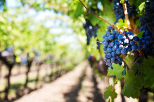 Resveratrol - The Anti-Aging Secrets and Benefits