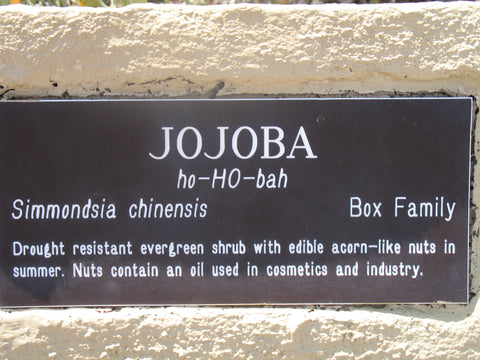 jojoba-oil-nut-health-benefits