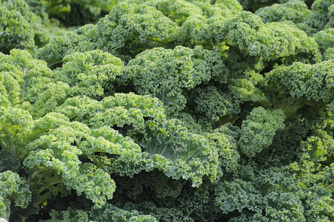 broccoli antioxidant superfood healthy living