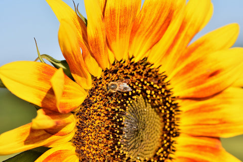 sunflower-seeds-best-foods-for-skin-health