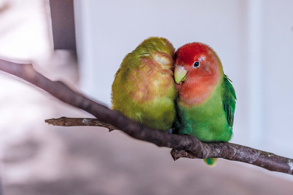 Love Birds Cruelty Free