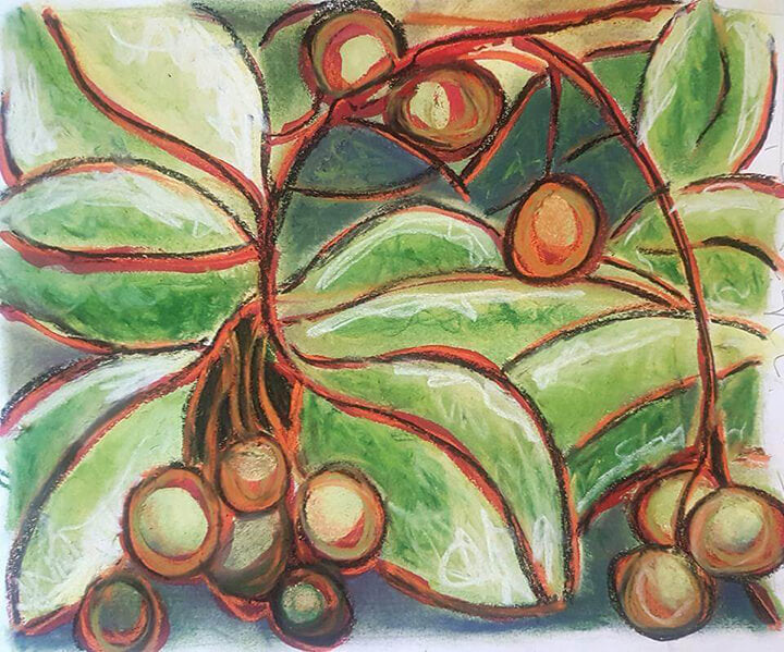 Tamanu Nuts - Watercolour by Linda Schofield - Tamanu Australia