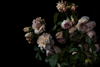 The Masters - Country Roses by Helen Bankers Photography