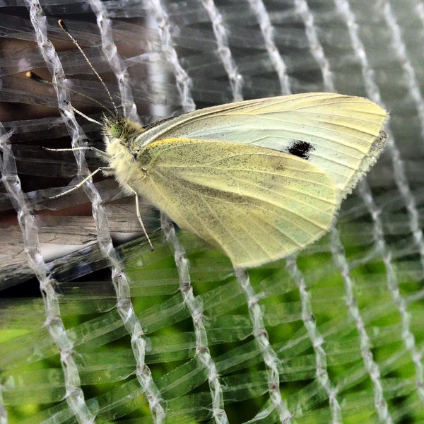 a moth unable to get into vegepod garden cover