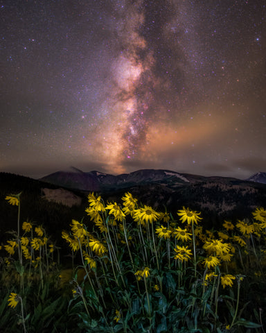 Tenmile Range Wildflower Milky Way
