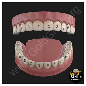 Grillz Diagram