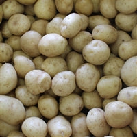 Bulk White Potatoes