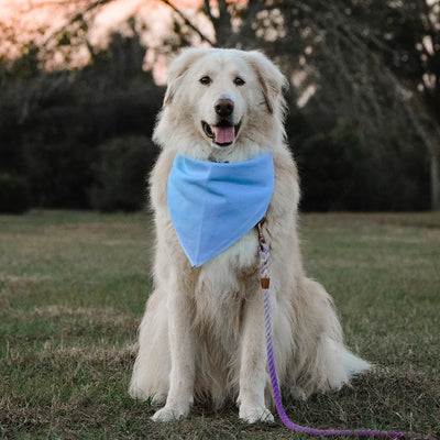 Banana Bandanas Glow dog bandana blue and pink abstract spread dog bandana