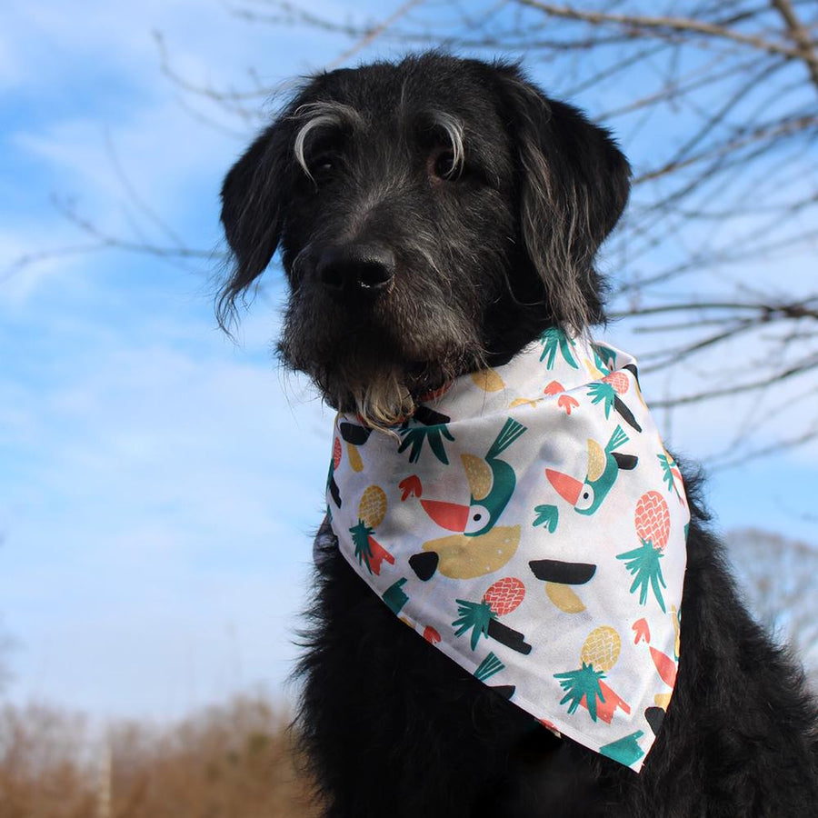 Pineapple Parrot - Matching Bandana Set