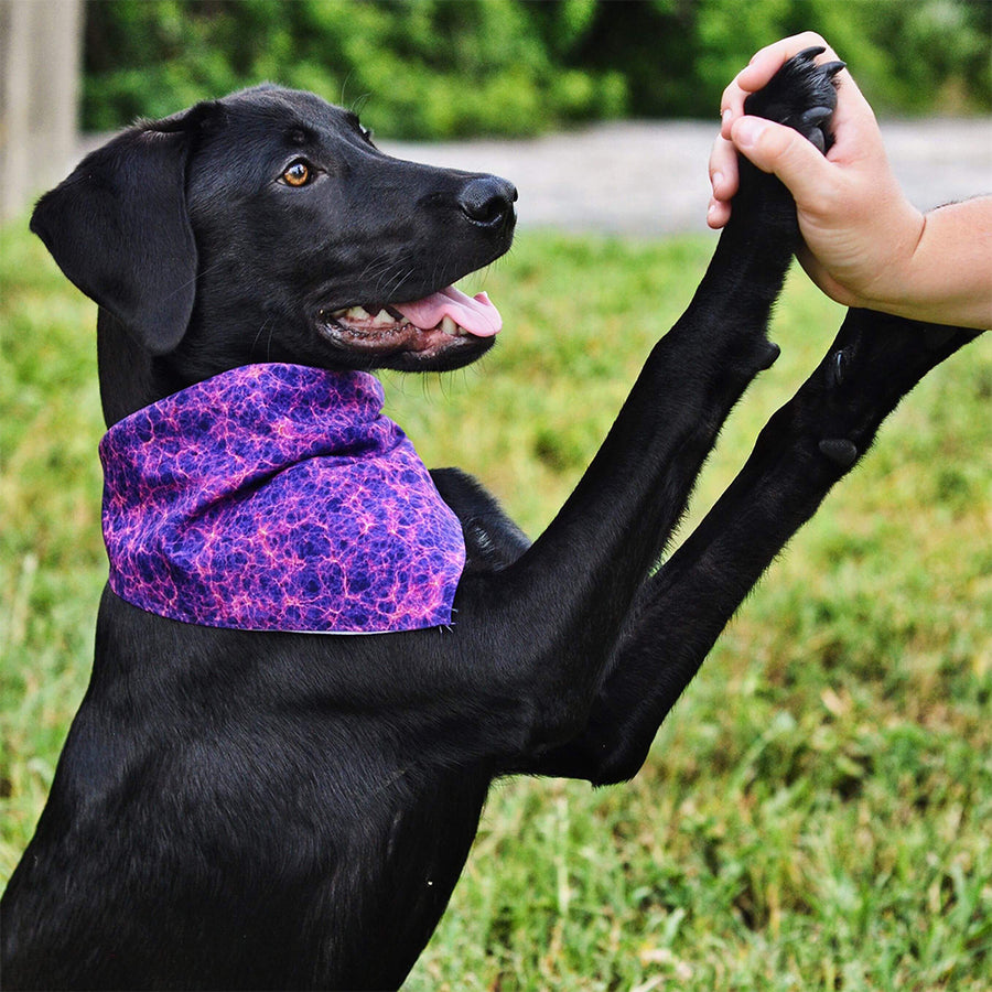 Banana Bandanas The Entire Universe dog bandana universe purple spread flat photo