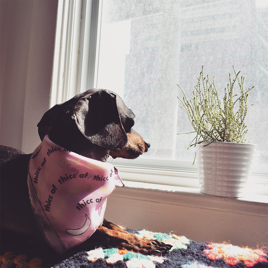 Banana Bandanas Thicc AF dog bandana thick as fuck pink pattern flat photo