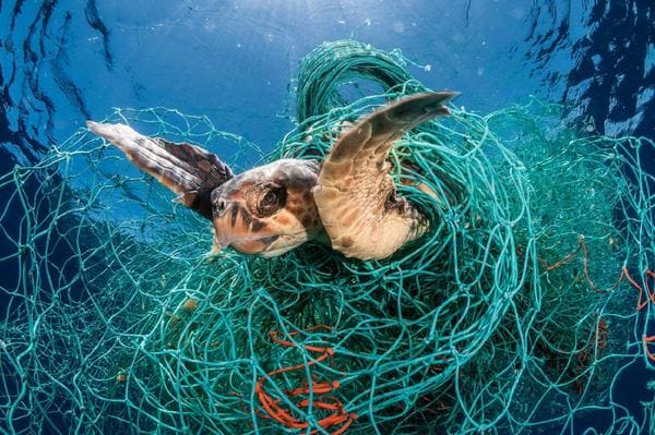 turtle tangled in a plastic net