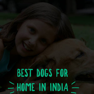 Best Dog For Home In India - Your Best Palatable Option !